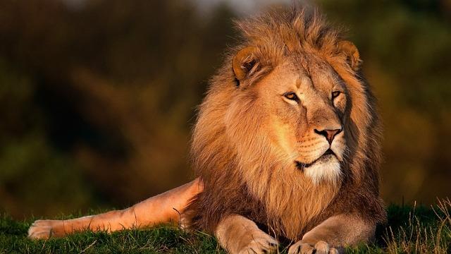 BISMARCK LIONS BIOLOGY